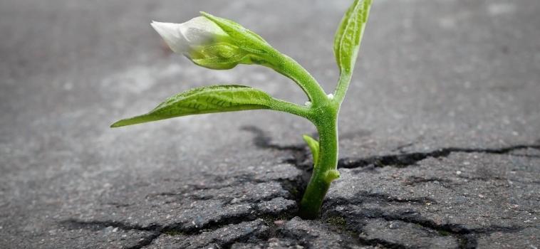Resiliencia empresarial, una actitud para tiempos difíciles