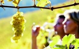 Hay muchas razones para recorrer la Ruta del Vino de Rueda… además del vino